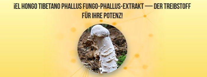 Phallus Impudicus