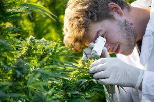Was die Wissenschaft über die Vorteile von Cannabis weiß – Mythen und Fakten!