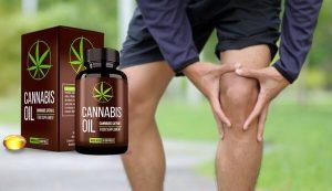 Cannabis Oil Kapseln – Bio-Lösung für abnehmbare & aktive Gelenke